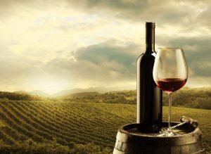 magazin vinuri Timisoara, Casa cu Vinuri Timisoara